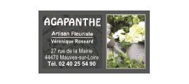 agapanthe