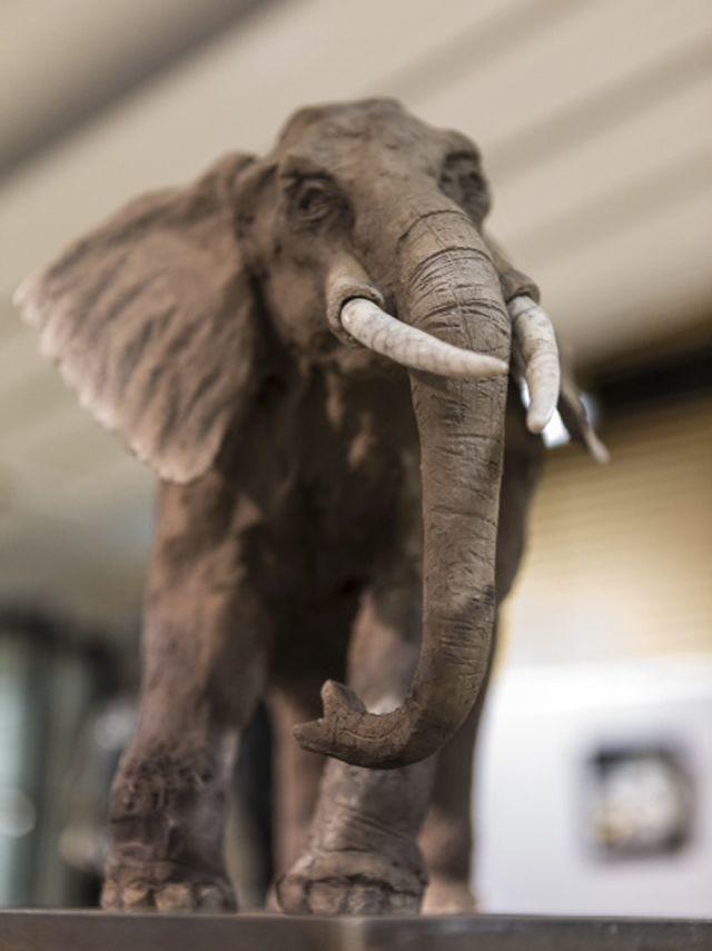 cr-elephant